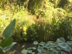 morning light in the garden