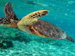 Sea Turtles - Snorkeling