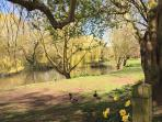 Nearby duck pond/nature reserve