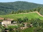 Our byodinamic vineyard