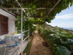 Garden with terrace.