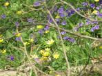 Enjoy flora au naturel and even find wild orchids