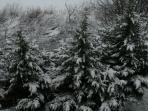 January 2016.  Beautiful snow covered trees from our balcony.