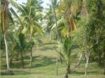 A view of the plantation