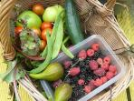 Fresh garden produce, all yours, no charge when available, or PYO