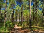 Forêt landaise tout autour