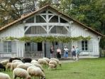Maison typique landaise (Ecomusée de Marqueze)