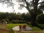 Vista giardino.