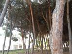 Pineta (pine trees), if you zoom the photo you see on the left the entrance of the resort.