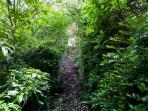 Garden - secret walkways