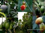 Tropical fruits in the Garden