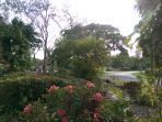 Lush mature tropical Garden