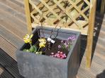 Plant containers round arbour seat.