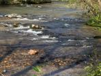 Visit the local creeks and streams and rivers that abound in this area