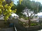 Vistas con árboles
