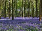 Enjoy a stroll through picturesque Weston Woods.