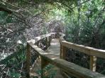 Nature Trail to Estuary