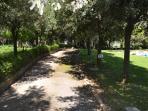 The path through the park