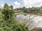 View from the tree house. The rice fields are harvested and ready for planting