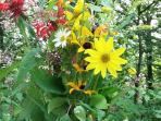 Pick a bouquet of summertime wildflowers from along the driveway.