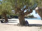 Old tamarisk trees on Kalogria beach.