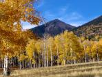 Aspens on Hart Prairie - San Francisco Peaks near Arizona SnowBowl Ski Area 12 mi. away