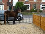 A curious neighbour!