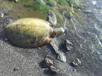 And meet a sea turtle.