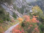 Local path in autumn