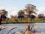 étang - notre parc de 4 hectares