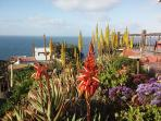 Spring flowers overlooking the pacific