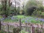 The garden at bluebell time at Orchard House