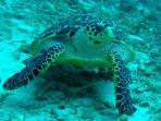 Yacht Blue Sky supports education programs to protect all sea turtles.