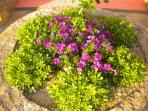 Nice yard nice  flowers !!