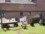Petit parc animalier, les oeufs des poules vous attendent...
