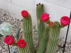 I have upwards of 200 different cactus...such an ugly plant to have such a beautiful flower....