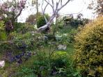 Shared Garden