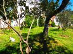 Our cute garden