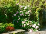 Shared Walled Gardens in Full Bloom