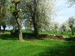 May - the orchard in full bloom.
