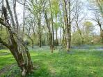 Bluebell Woods to discover
