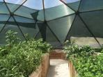 Our dome greenhouse filled with goodies.