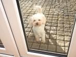Sandy Shores Croyde Holiday Cottages Pet Friendly