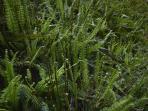 Ferns at Stylish Cabin