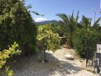 Lemon and grapefruit trees in garden