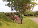 garden beside parking bay