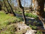 River bordering the farm