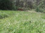 Field of wildflowers in May, daisies, pyramidal orchids and bee orchids. Path into and around woods.