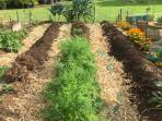 All Organic Produce