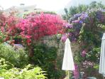 secluded patio with glorious colour
